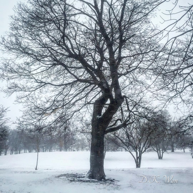 winter_tree_[2]