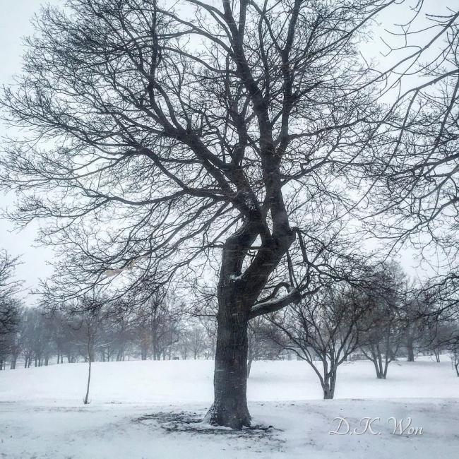 winter_tree_[2]