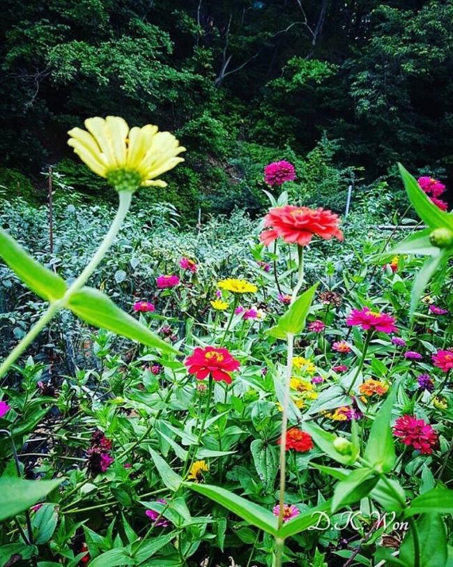 flower_1_1