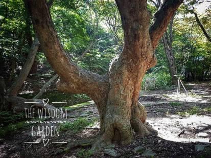 maa_tree